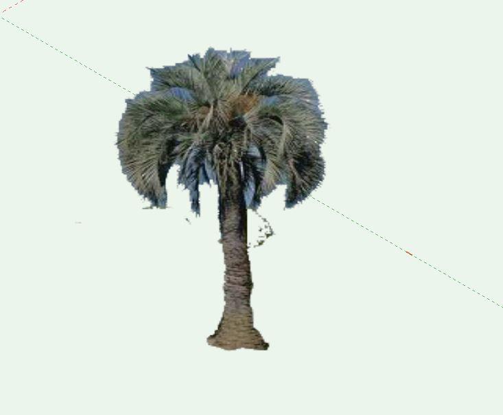 Jelly Palm.JPG